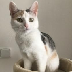 Kočička Amálka