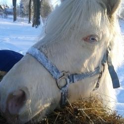 LUKY - dostihový poník